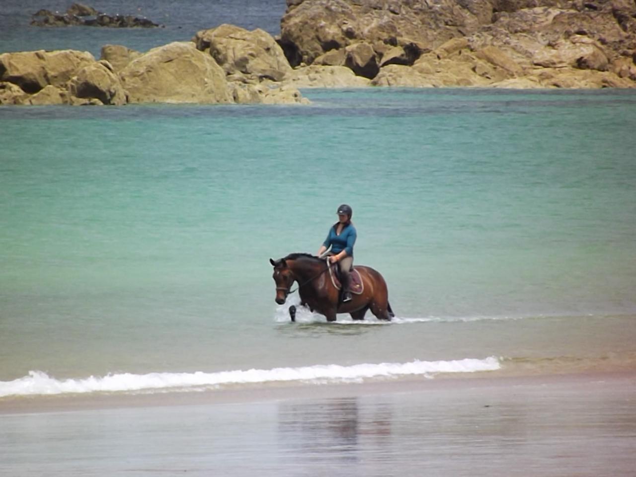 cheval mer calme thalasso bien-être soins équine curistes