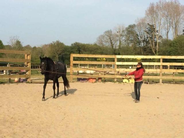 debourrage chevaux longues renes bouyou jennifer