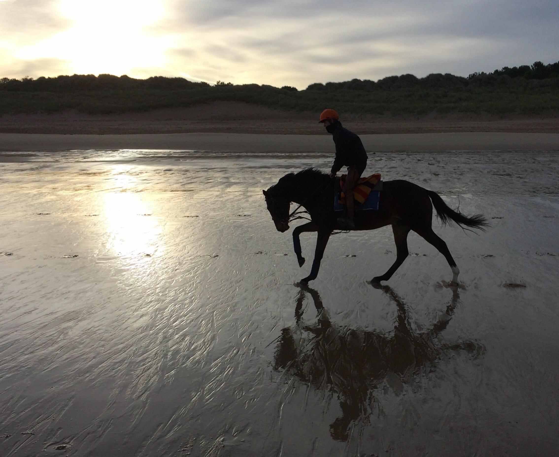 galop plage entrainement soleil élastiques cavalier matin