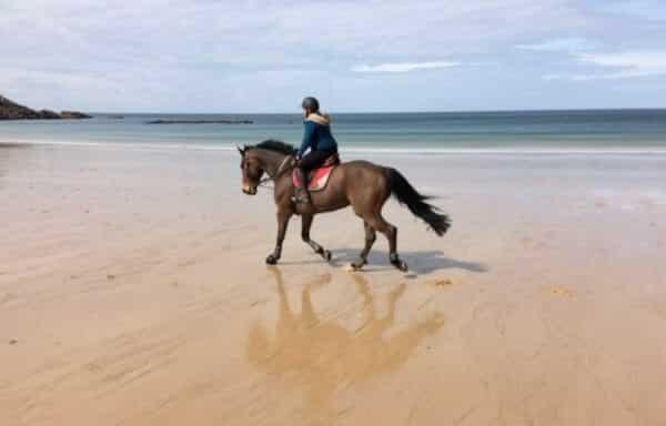 cheval plage trot remise en forme cavalier bettinger bretagne séjour cheval de sport