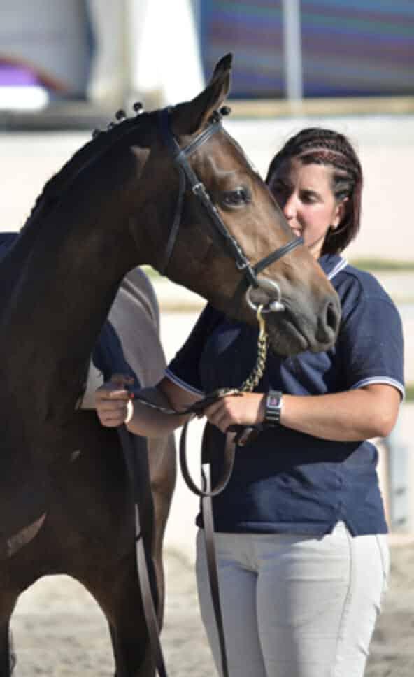 milena le guen élevage de chevaux alias phoenix elevage poney sport