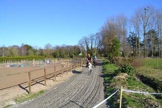 cheval piste galop dressage pre-entrainement debourrage courses hippiques calme vert verdure